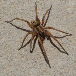 Уничтожение пауков в Радужном